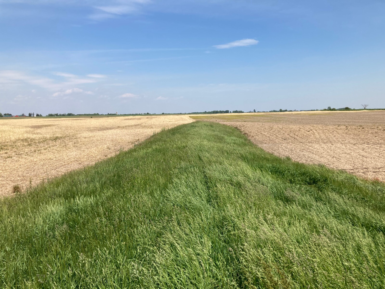 Cover Crop vs No Cover Crop (cereal rye)