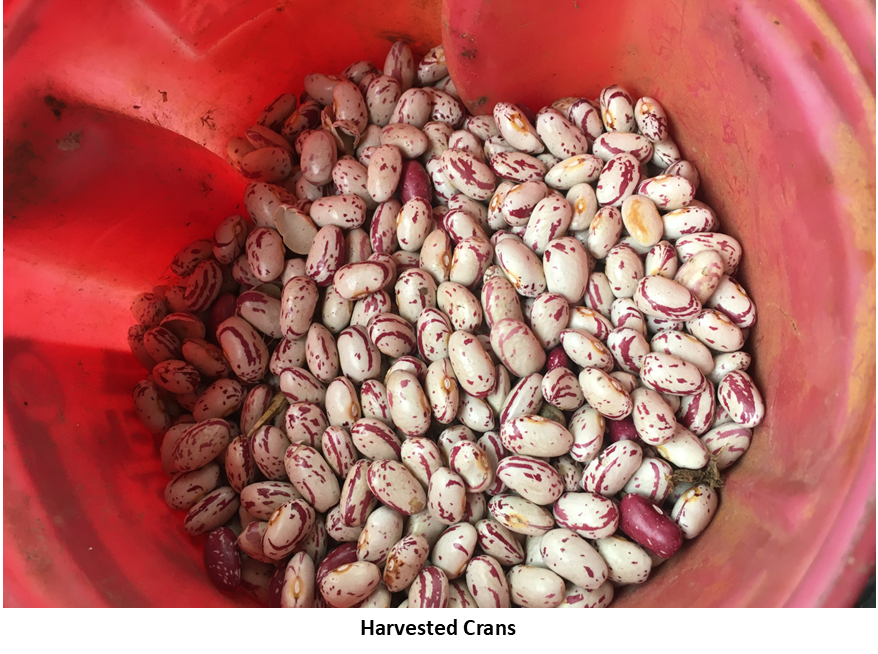 Harvested Crans