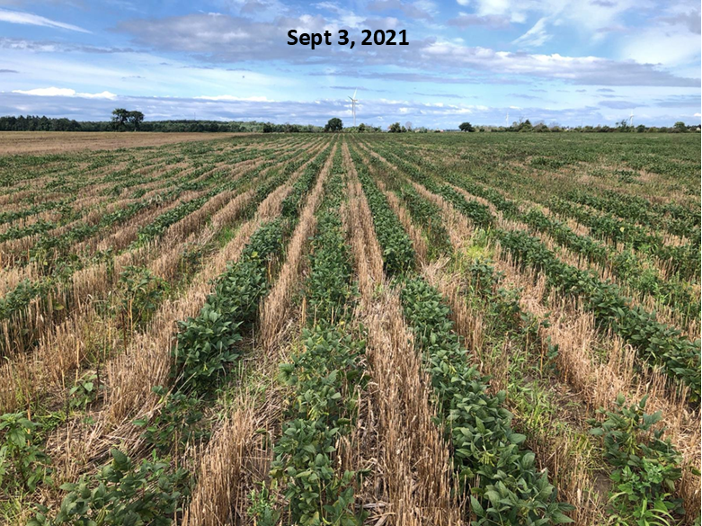 Relay Beans – field pic
